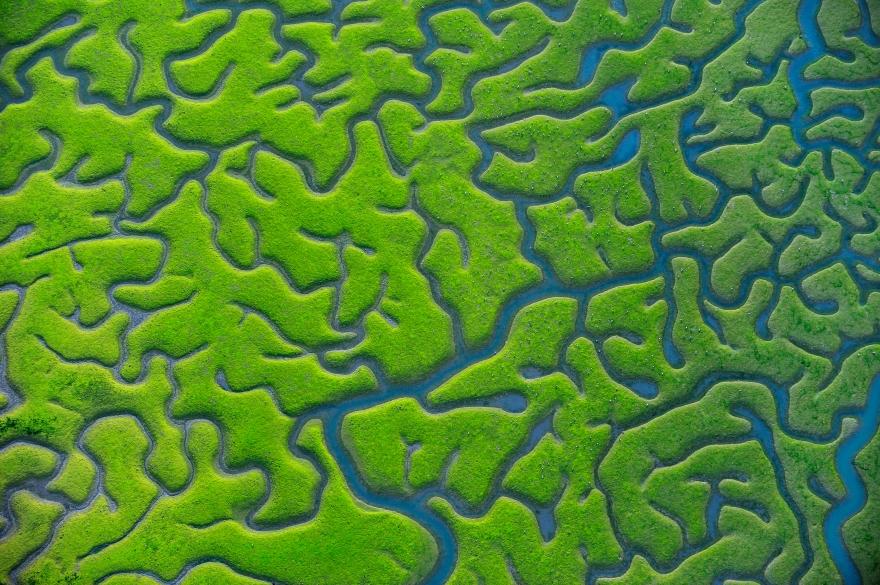 Salt marsh mosaics