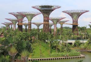 Solar powered super trees create energy, harvest rainwater, sequester carbon